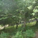 Plantación de manzanos Asturias