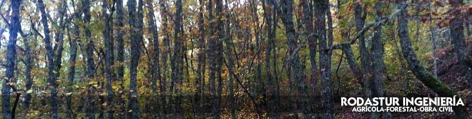 experiencia en el sector forestal